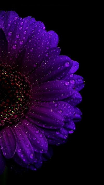 1000+ ideas about Purple Wallpaper Iphone on Pinterest | Purple wallpaper, Floral prints and ...