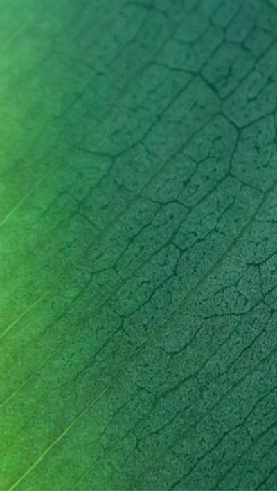 Natural Green Leaf Texture Pattern #iPhone #6 #wallpaper | iPhone 6 Wallpapers | Pinterest ...