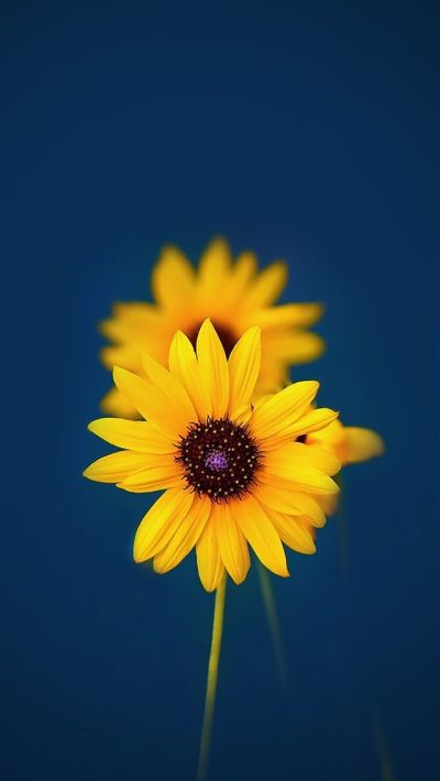 Best 25+ Iphone Wallpaper Yellow ideas on Pinterest | Dark phone wallpapers, Screensaver and ...
