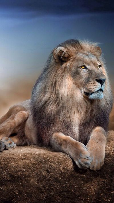LION IPHONE WALLPAPER, BACKGROUND | IPHONE WALLPAPER / BACKGROUNDS | Pinterest | Wallpaper ...