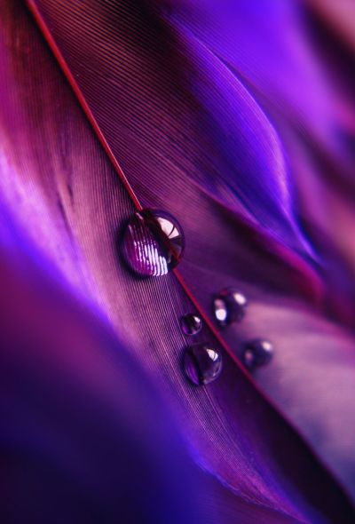 1000+ images about PURPLE on Pinterest | Purple dress, Violets and Purple glass