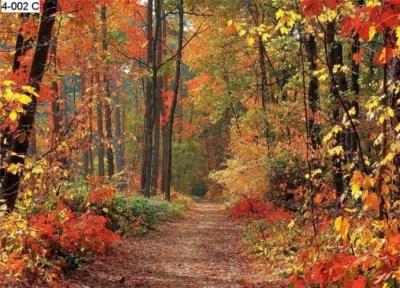 WOODLAND WALL MURALS | Autumn Forest Photo Wall Mural - Photo Wall Murals | GINAS FAVORITES ...