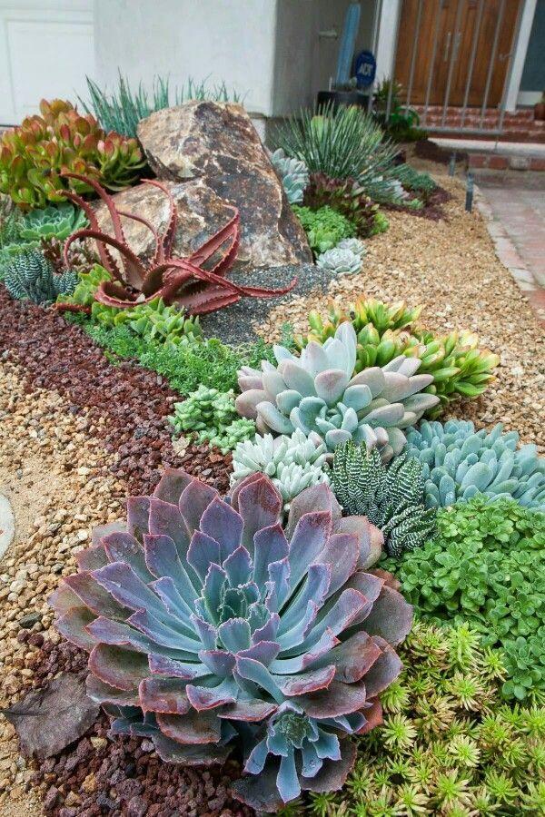 Merveilleux Best 25+ Succulent rock garden
