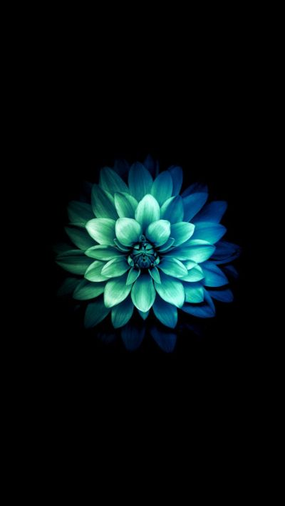 620 best images about iPhone wallpapers on Pinterest | Iphone 5 wallpaper, Flower wallpaper and ...
