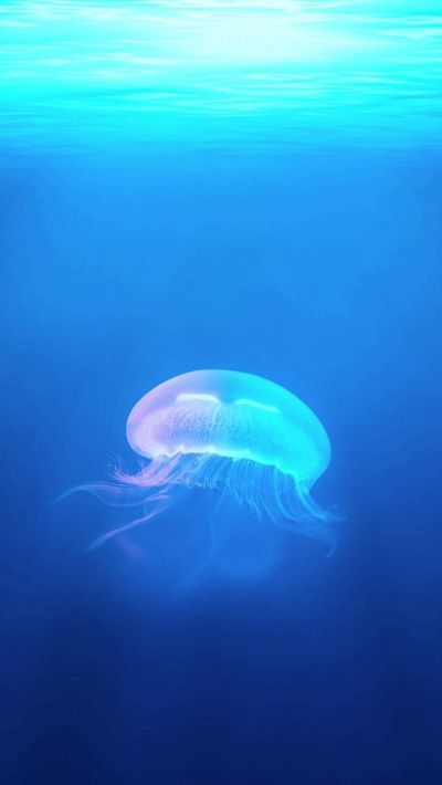 Ocean Jellyfish Surreal Light #iPhone #5s #wallpaper | iPhone 5(s) Wallpapers | Pinterest ...
