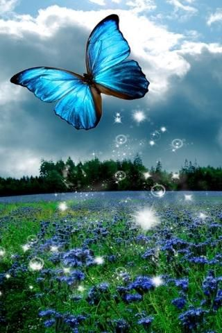 3D Butterfly Wallpaper | Download 3D Butterfly Live Wallpaper HD for android, 3D Butterfly Live ...