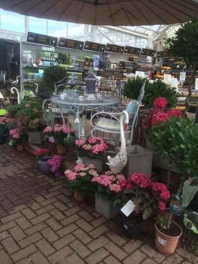 1000+ images about Matlock Garden Centre (Blue Diamond ...