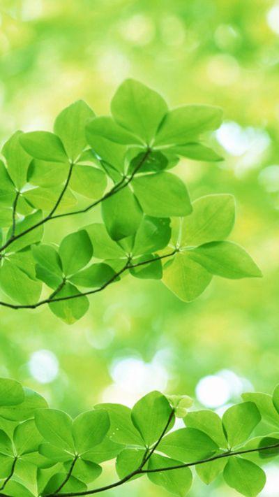 Nature Sunshine Green Leaves #iPhone #7 #wallpaper | iPhone 8 wallpapers | Pinterest | Natures ...