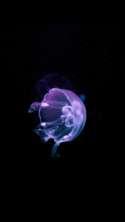Jellyfish iPhone wallpaper background | ♥ iPhone Wallpaper ♥ | Pinterest | Wallpaper backgrounds ...