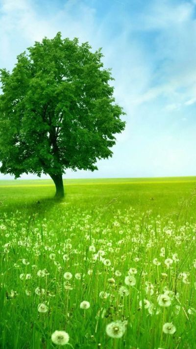 Green Tree. Beautiful nature landscape. Tap to see more beautiful landscape iPhone Wallpapers ...