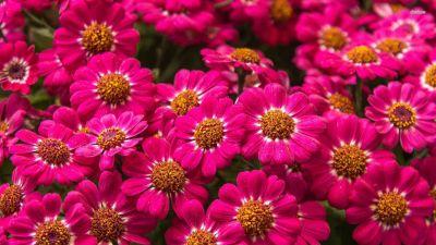 Full HD p Flowers Wallpapers, Desktop Backgrounds HD, Pictures 1920×1080 Wallpaper Hd Flowers ...