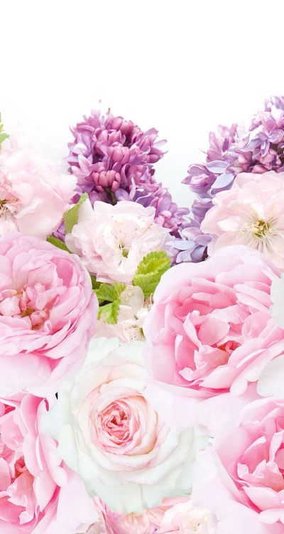 Untitled | Flowers | Pinterest | Purple peonies, Peony and Wallpaper