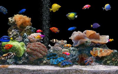 Download Live Hd Wallpaper Fish Aquarium 3d Desktop Aquarium 3d | Best Games Wallpapers ...
