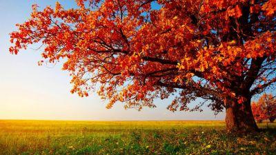 High Resolution Nature Desktop HD Wallpaper Widescreen Free | wallpapers | Pinterest | Wallpaper ...