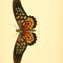 V 1 3 1837 Plates Illustrations of Exotic Entomology