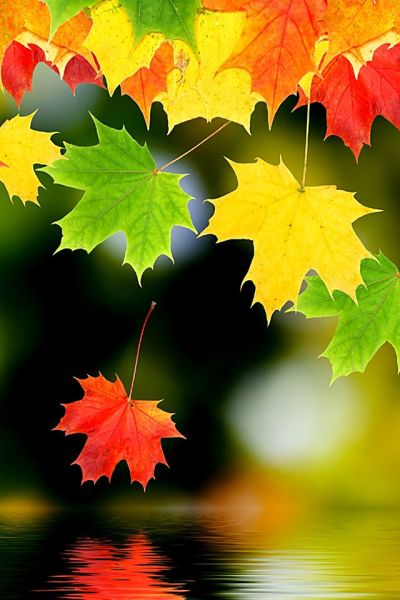 Autumn Leaf Wallpaper. #leafs #fall #autumn #iphone #wallpaper | iPhone Wallpapers | Pinterest ...