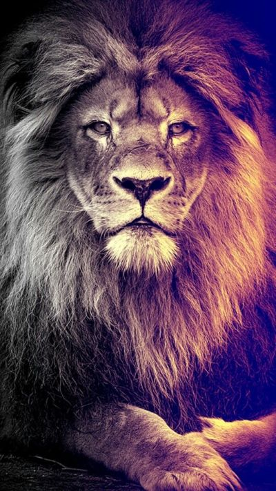 Best 25+ Lion wallpaper ideas on Pinterest | Lion wallpaper iphone, Lion live wallpaper and King