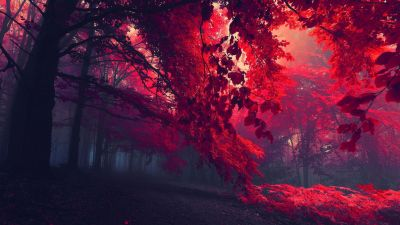 Forest trees hd wallpaper fullhdwpp full hd wallpapers 1920x1080. | Forest trees hd wallpaper ...