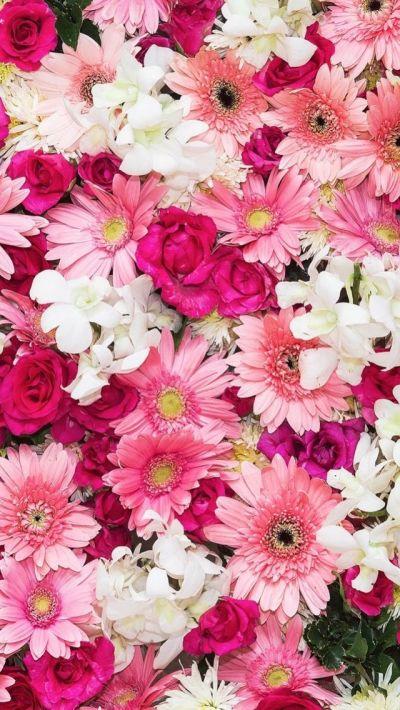 iPhone wallpaper flowers | Обои iPhone wallpapers | Pinterest | Wallpaper, Flower and Flowers