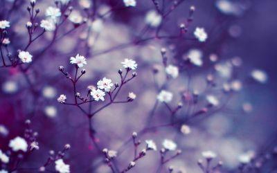 Download Retina Nature Wallpaper HD Resolution #0iy 2880x1800 px 1.50 MB | Fondos | Pinterest ...