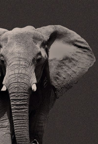 TAP AND GET THE FREE APP! Animals Unicolor Elephant Stylish Cool Wild Gray HD iPhone 6 Wallpaper ...