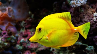 Fish Wallpapers | Best Wallpapers