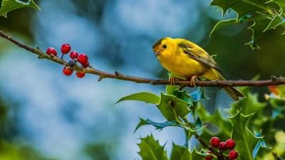Birds Wallpapers | Best Wallpapers