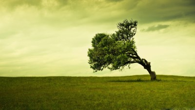 Tree Wallpapers | Best Wallpapers