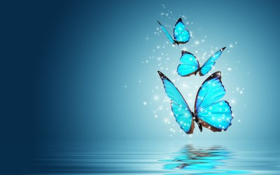 Butterfly Wallpapers | Best Wallpapers
