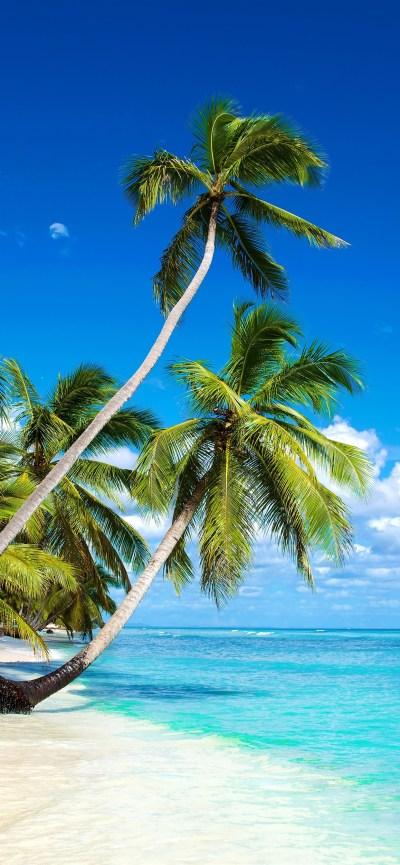 Beautiful beach, palm trees, sea, blue sky, clouds, tropical 1242x2688 iPhone XS Max wallpaper ...