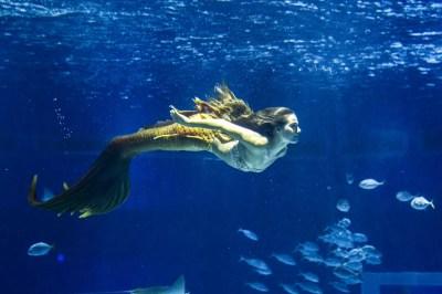 Isis Valverde supera medo ao gravar cenas de Rita em aquário: 'Foi emocionante' | Bastidores | Gshow