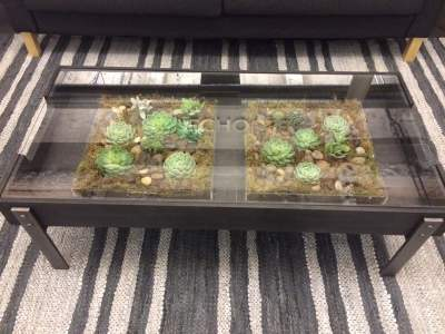 2 succulent arrangements under a glass coffee table. (I provided the acrylic containers and ...