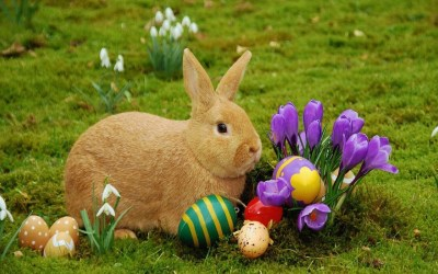 30/3/18 – Easter Message – For the Animals, Every Day is a 'Good' Friday. | Serbian Animals ...