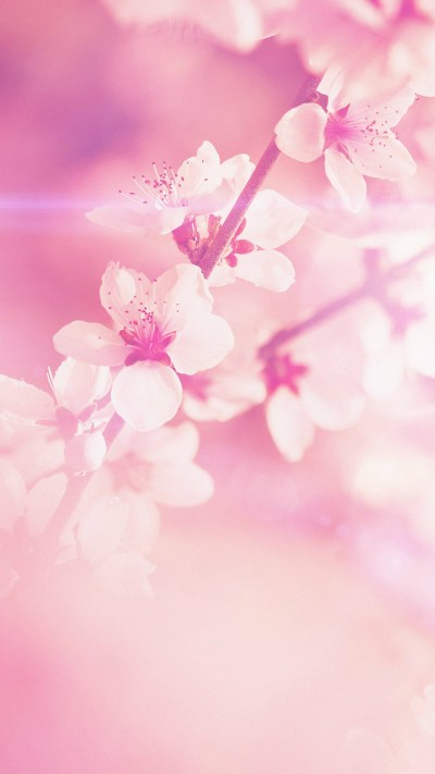 Light Pink iPhone Wallpaper HD - Supportive Guru