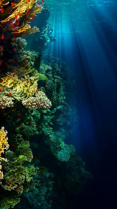 Underwater Wallpaper c69baccf6b146dd80aa889b5ddea1d27 - Supportive Guru