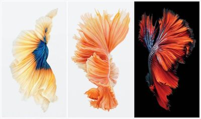 iPhone 6S Live Wallpapaers For Android | Online Marketing Learning Community Sri Lanka