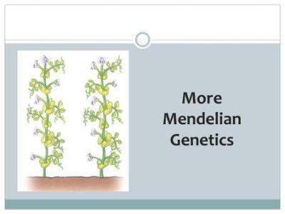 KCI 2014 BEYOND MENDELIAN GENETICS Conditions that Mendel didn't explore: Incomplete Dominance ...