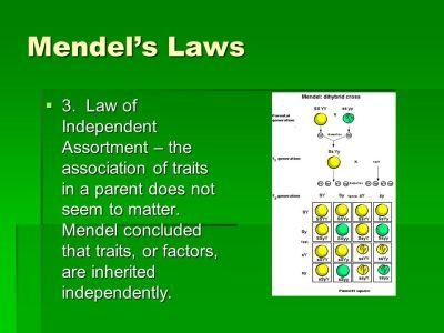 Fundamentals of Genetics - ppt download