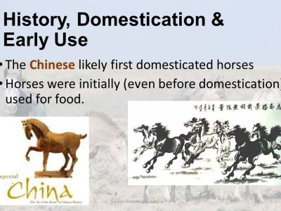 Evolution of the Horse History of the Horse - ppt video online download