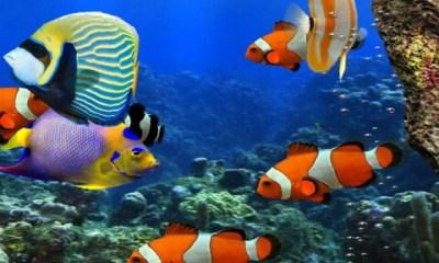 Free 3d HD Live Fish Wallpaper APK Download For Android | GetJar
