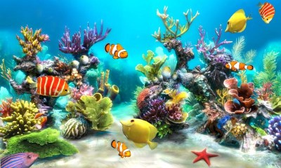 Free HD Fish Live Wallpaper - Live Fun APK Download For ...