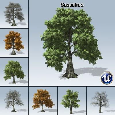 Sassafras (UE4) - SpeedTree