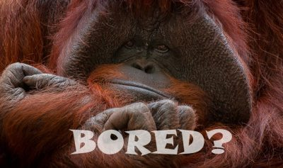 50 Things to Do When You're Bored Online   StudioKnow