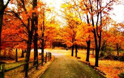 Autumn Inspiration | Sunhealers