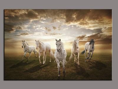 صور خلفيات خيول عربية اصيلة واجمل احصنة في العالم HD | سوبر كايرو