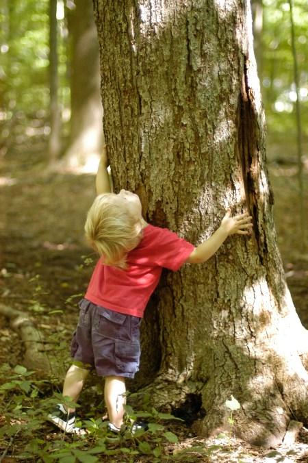 Dsc Hugging Of Trees