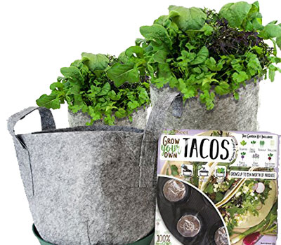 Grow Your Own Tacos Garden Full Kit
