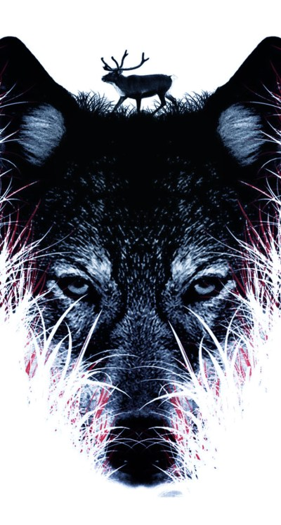Black Wolf Wallpaper Iphone