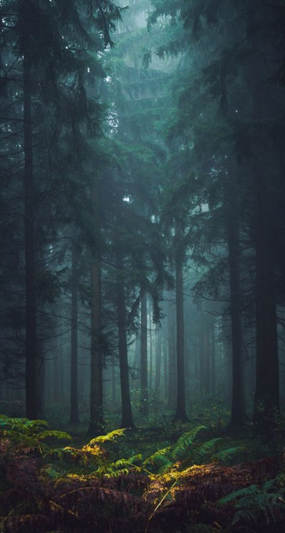 Misty Forest - The iPhone Wallpapers