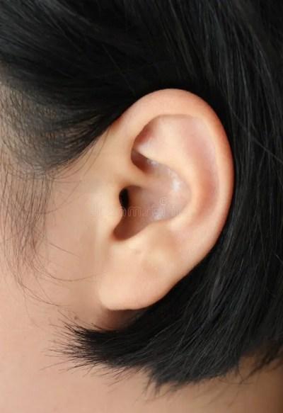 Human ear closeup stock image. Image of close, sensory - 58006865